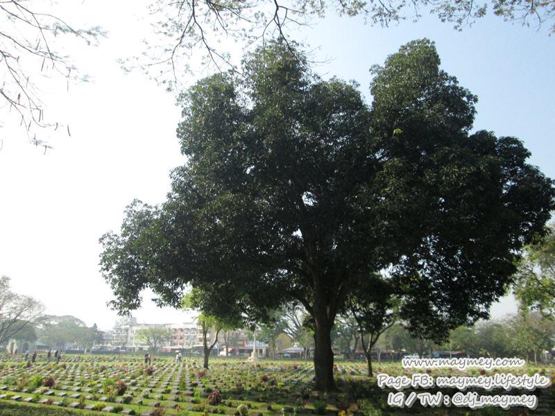 สุสานทหารสัมพันธมิตรดอนรัก และ พิพิธภัณฑ์ทางรถไฟไทย-พม่า ริมถนนแสงชูโต จ.กาญจนบุรี
