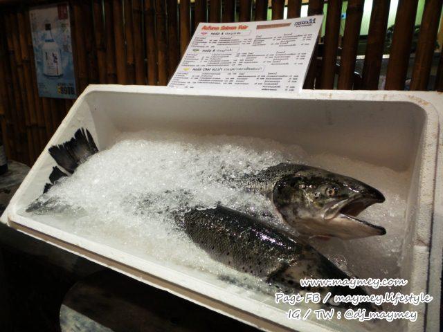 ไซส์ปลาแซลมอน 4-6 กิโลกรัม