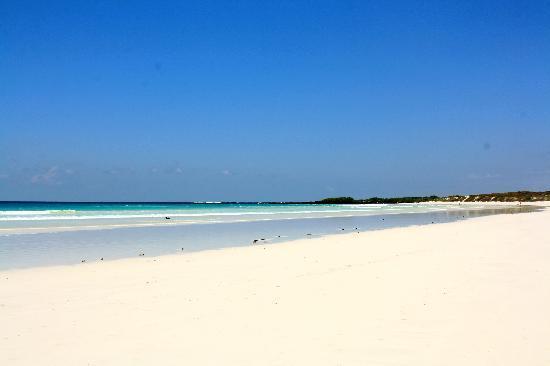 ชายหาดบนเกาะกาลาปากอส